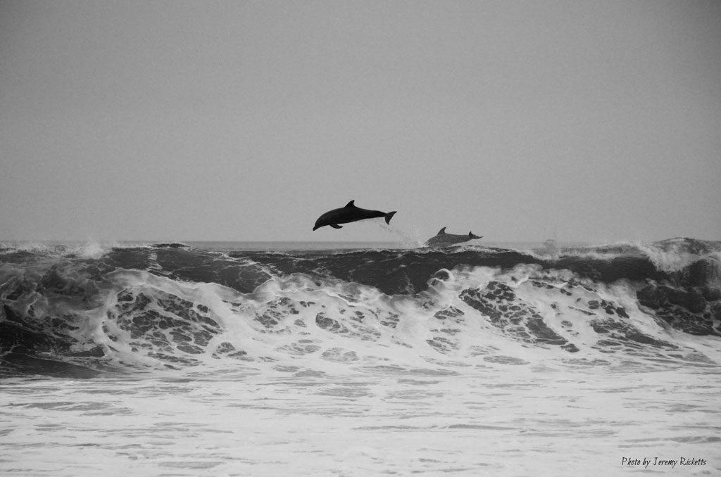 journee-mondiale-ocean-danger