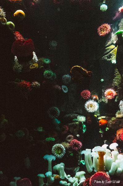 journee-mondiale-ocean