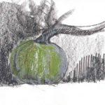 Quels légumes d'hiver manger ? Les 4 Saisons - Projet la Passerelle