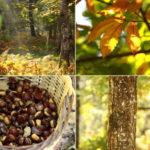 Les fruits d'hiver... 100% cocooning ! - les 4 saisons - Projet la Passerelle