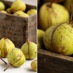 fruits d hiver