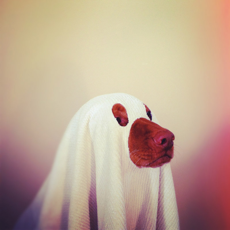 lucy ghost dog