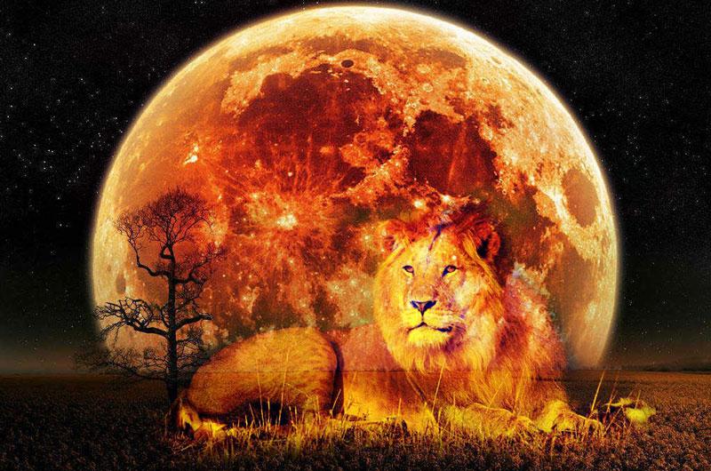 le signe du lion , le Roi des rois
