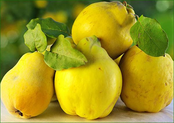 Coings du cognassier, cuisiner les fruits et légumes anciens - Projet la Passerelle