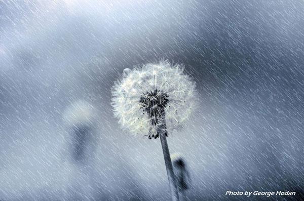 Nouvelle Lune du 7 décembre. Quelle Intention ? Détermination - Projet la Passerelle