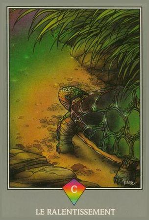 le-ralentissement-sagesse-tortue