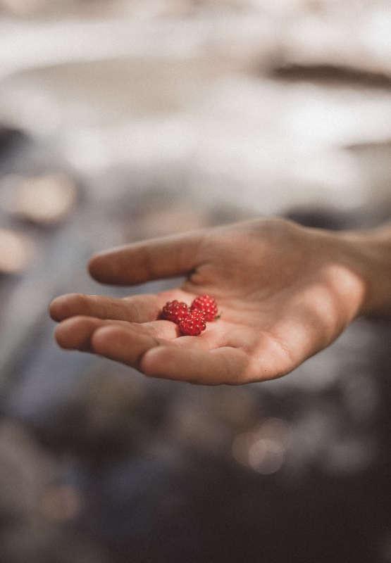 plante-est-un-etre-vivant-generosite