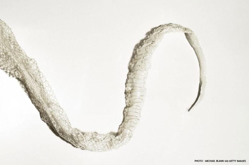 mue-de-serpent-intention-changement